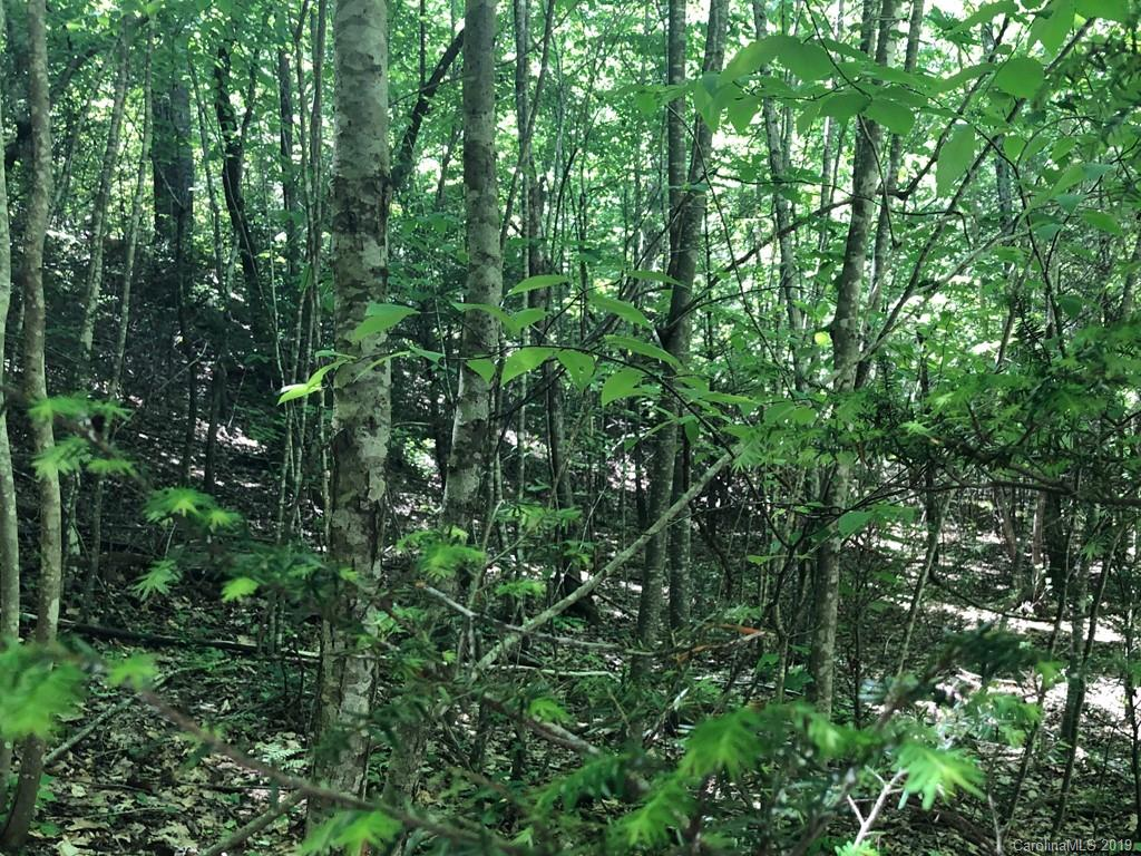 Clear Spring Trail, Nebo, NC 28761, MLS # 3504542