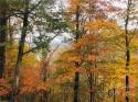 99999 Freemont Drive # 70, Leicester, NC 28748, MLS # 3569900 - Photo #5
